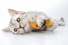 imagem-gato-post
