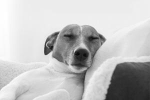 hospedagem-veterinaria
