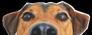 vet ypiranga veterinária